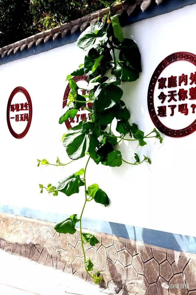 文明播报    位于白银市白银区水川镇的顾家善村是一个让人望得见山